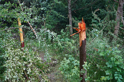 'Heartbreak' as vandals destroy trees at Manor Road Community Woodland, Keynsham